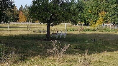 Fotoalbum Wanderung zum Bauernhof