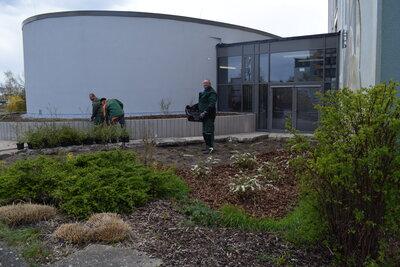 Fotoalbum Bepflanzung im Außengelände der Aula