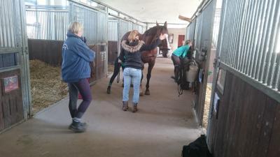 Fotoalbum Wellness für's Pferd