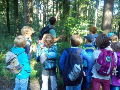 Fotoalbum Ein Tag im Wald - 3. Klassen