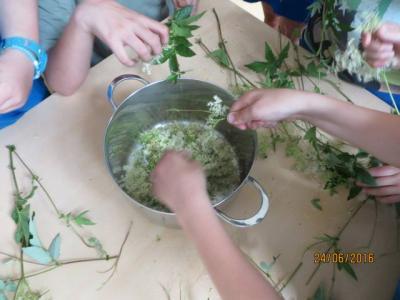Fotoalbum Arbeitsgruppe: Pflanzen am Wasser