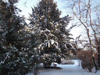 Fotoalbum Winter im Landschaftspark