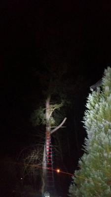 Fotoalbum Einsatz am 23.02.2017 Umgestürzte Bäume in Schlottenhof