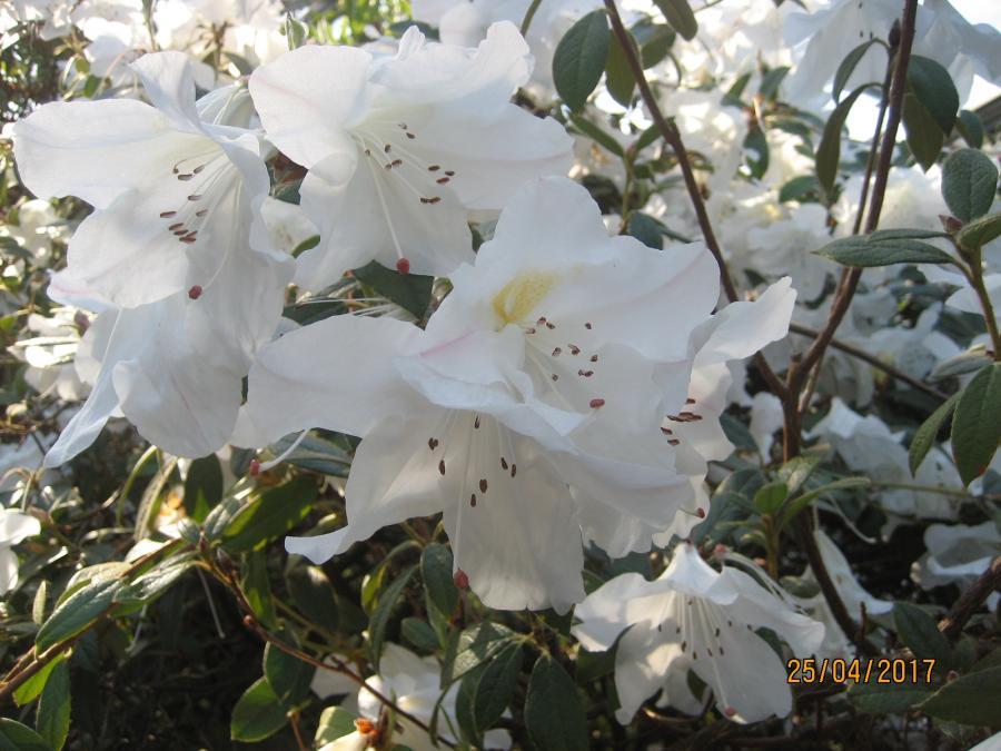 fotos rhododendronpark bremen
