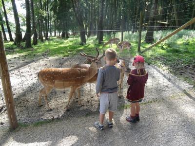 Fotoalbum EISs-Kinder besuchen den Wildpark Poing