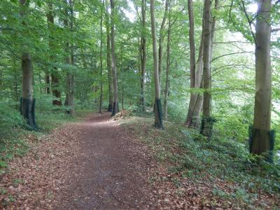 Fotoalbum Biberschutz im Park Hoppenrade