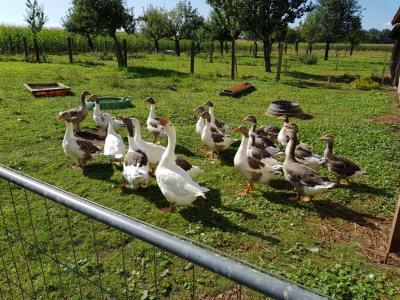 Fotoalbum Zu Besuch auf dem Bauernhof