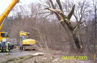 Foto des Albums: Einsatz Baum auf Bagger am 03.03.2008 im OT Meisdorf (03.03.2008)