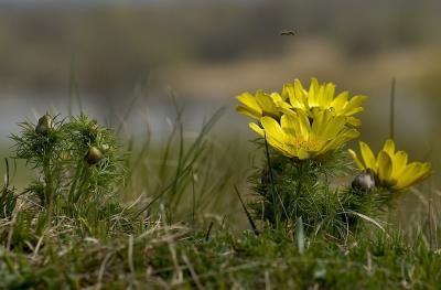 Fotoalbum Natur rund um Reitwein 1