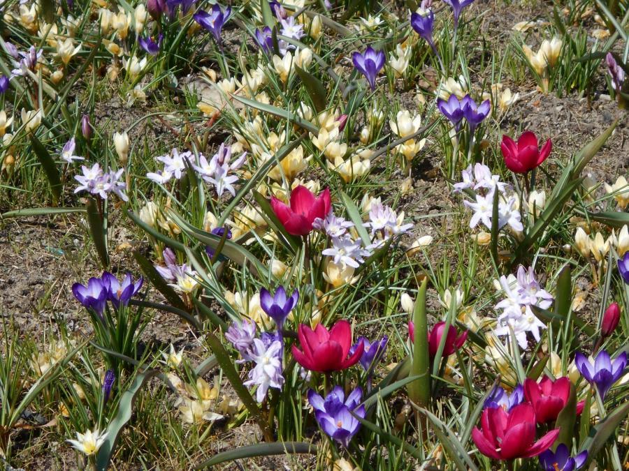Furstenwalde Spree Fruhling Sonne Blumen Zarte Fruhbluher