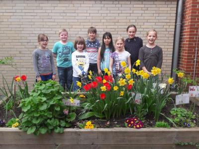 Fotoalbum Unsere Garten-AG bringt die Innenhöfe zum Blühen