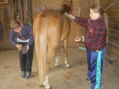 Fotoalbum Das Glück der Erde, liegt auf dem Rücken der Pferde!