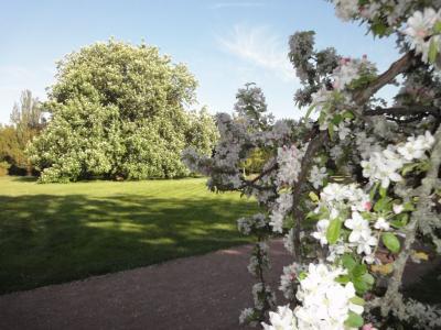 Fotoalbum Blütenzauber im Landschaftspark Degenershausen