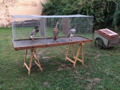 Fotoalbum Versammlung mit Tierbesprechung