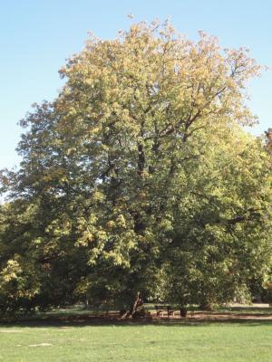 Fotoalbum Herbst im Landschaftspark