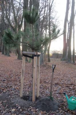 Fotoalbum Pflanzung des Korrespondenzbaumes zum Patenbaum im Luthergarten im Reinharzer Schloßpark