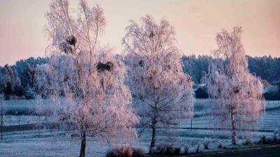 Fotoalbum Fotowettbewerb für Großräschen Einsendungen  2019