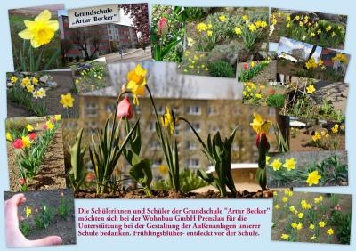 Fotoalbum Flower-Power - Frühlingsblumen entdeckt