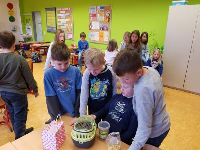 Fotoalbum Mein Haustier - Sachunterricht in der Lerngruppe 2a