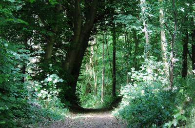 Fotoalbum Wald