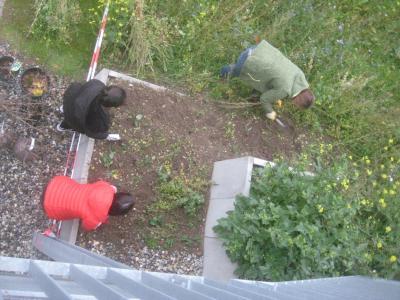 Fotoalbum Start eines Schulgartens mit Beerensträuchern