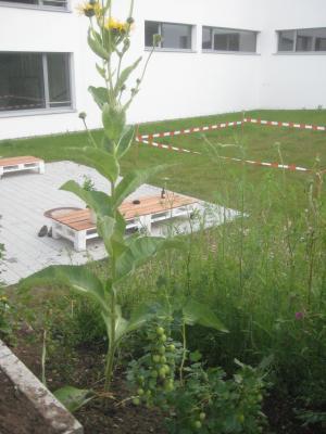 Fotoalbum Schülergarten und Hochbeet entstehen