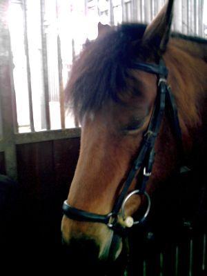 Foto des Albums: Portrais unserer Pferde in der Reitschule Cerstin Hille (31.12.2008)