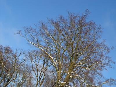 Foto des Albums: Babelsberger Park im Winter (03.01.2010)