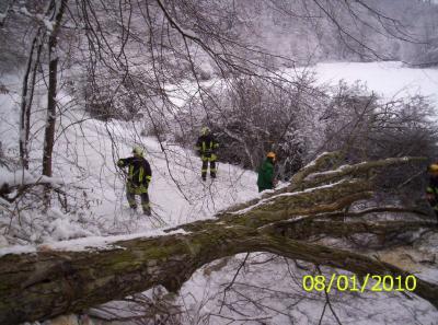 Foto des Albums: Einsatz Baum auf Strasse in Pansfelde (08.01.2010)