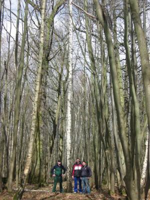 Fotoalbum Aussuchen des Pfingsbaumes