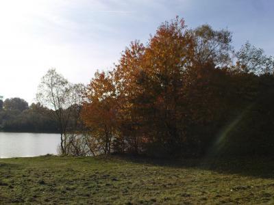 Foto des Albums: Herbstimpressionen (18.11.2010)