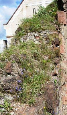 Fotoalbum Frühjahr im Kloster Buch