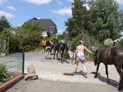 Foto des Albums: Einzug der Fohlen (12.06.2011)