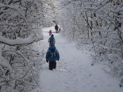 Foto des Albums: Waldstrolche im Winter (01.07.2011)