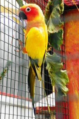 """Foto des Albums: Ausstellung der Vogelfreunde """"Kyritz an der Knatter"""" (30.10.2011)"""