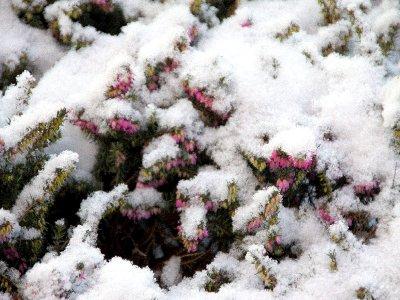 Fotoalbum Winter in Schönhagen  ( 2012 )