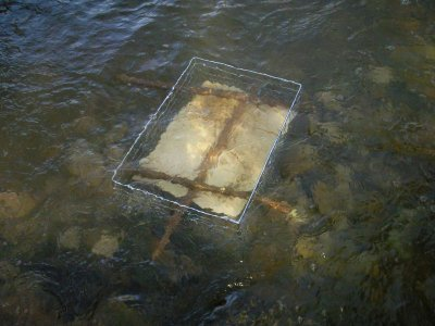 Fotoalbum Brutboxprojekt der Fischerjugend