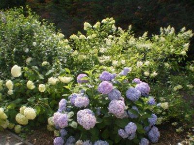 Fotoalbum Garten
