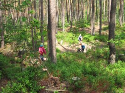 Foto des Albums: Sommer im Wald (04.03.2013)