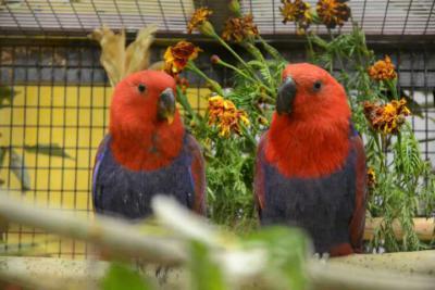 "Foto des Albums: Ausstellung der Vogelfreunde ""Kyritz an der Knatter e.V."" (05.10.2013)"