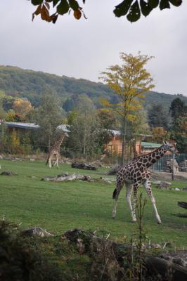 Fotoalbum Opel Zoo