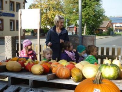 Fotoalbum Das Kürbisprojekt der blauen Gruppe (Kindergartengruppe)