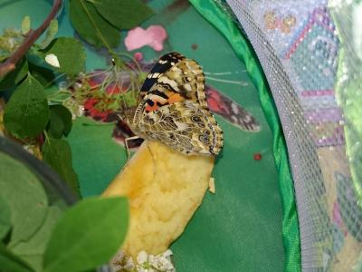 Foto des Albums: Von der Raupe zum Schmetterling (04.06.2015)