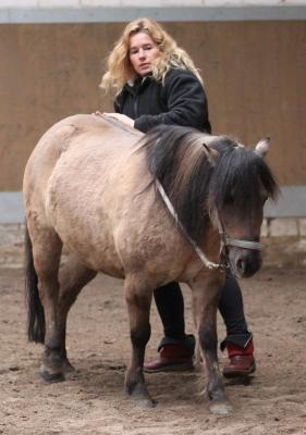Fotoalbum Pferdemassageseminar