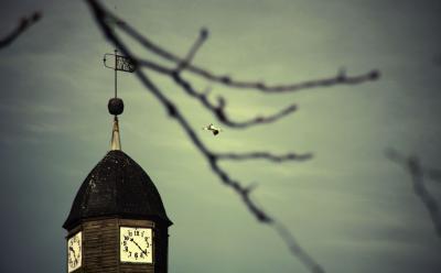 Fotoalbum Freyensteiner Storch
