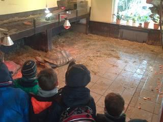 Foto des Albums: Klasse 1 besucht im Sachkundeunterricht die Schildkröten von Dr. Mittag (18.06.2016)
