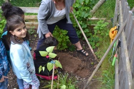 Katholischer Kindergarten Schöllkrippen Ab Ins Beet Mit Rabe Socke