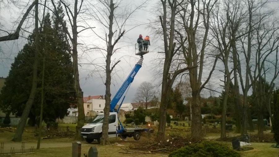 Foto der Galerie: Baumfällung
