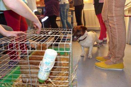 Foto der Galerie: Haustierbesuch in der Grundschule