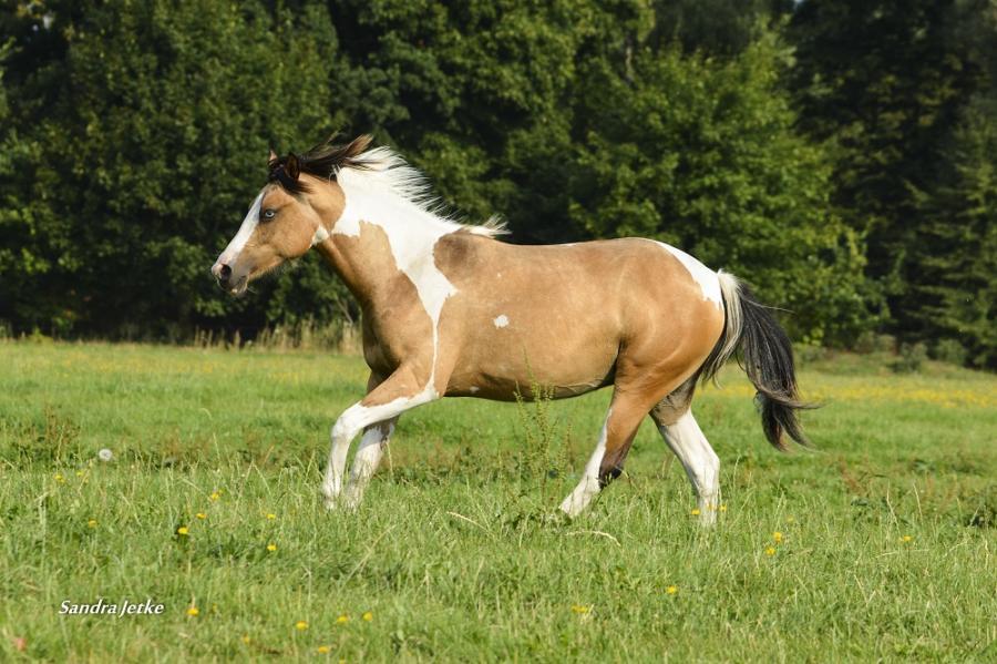 Foto der Galerie: Pferde